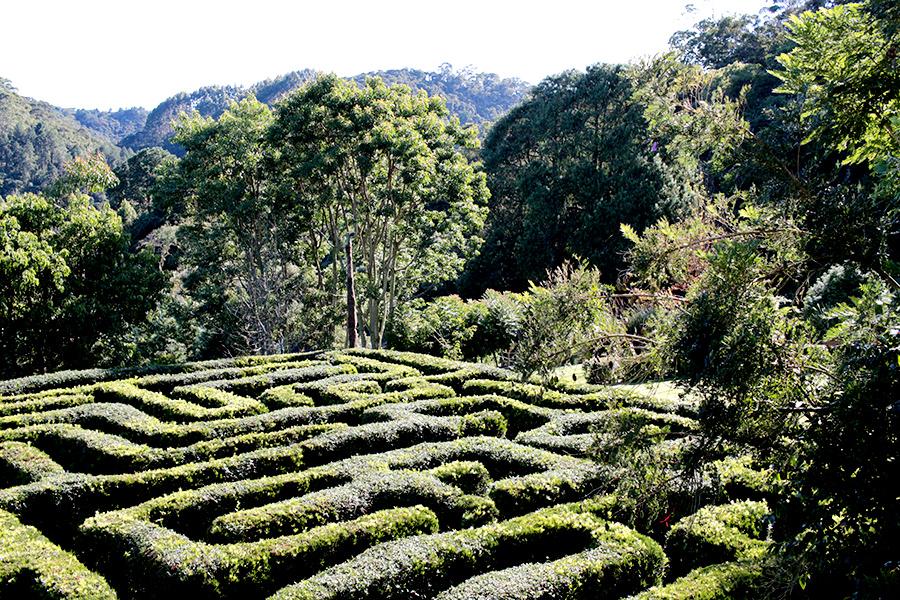 Labirinto Clássico - Visto em jardins e castelos da Europa, conta com 450m2 de área e 600m de corredores. Tem origem inglesa.