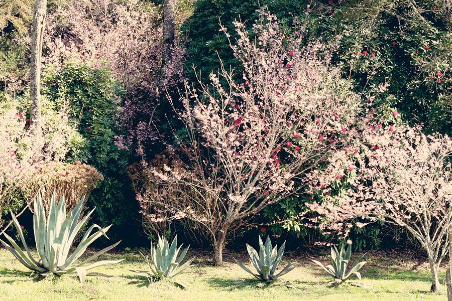 Parque das Cerejeiras