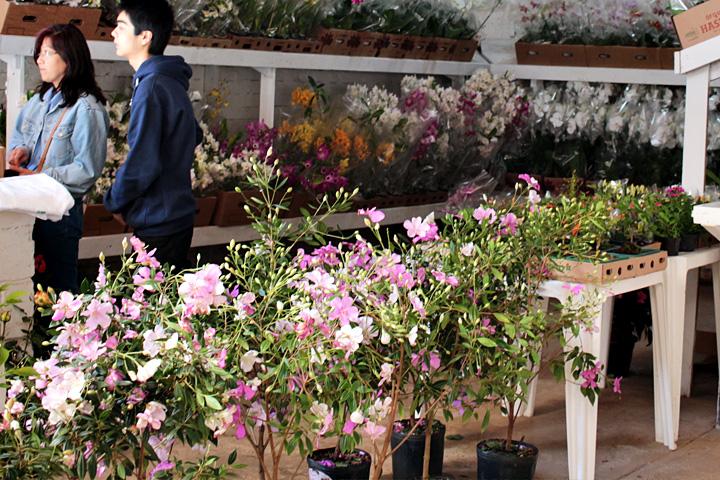Mudas de várias flores incluindo cerejeiras